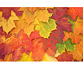 Autumn, Autumn Leaves, Autumn Leaf