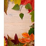 Autumn, Autumn Leaves