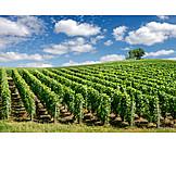 Winemaking, Vineyard, Cultural landscape