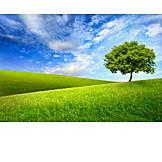 Landscape, Nature, Meadow, Season