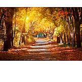 Park, Autumn, Tree Alley