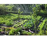 Garten, Beet, Sprinkler, Schrebergarten
