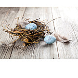 Quail, Bird's nest