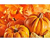 Herbst, Kürbis