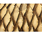 Close-up, Pine Cone