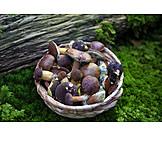 Mushroom, Mushroom