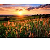 Twilight, Landscape, Sunset, Field