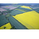 Field, Aerial View, Rape Field, Land Parcel