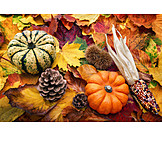 Autumn, Thanksgiving, Autumn Decoration