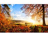 Herbst, Herbstlaub, Herbststimmung, Holzbank