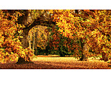 Park, Autumn, Oak Tree