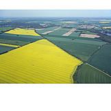 Landwirtschaft, Luftaufnahme, Rapsfeld