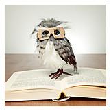 Bildung, Lesen, Eule, Gebildet