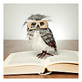 Education, Reading, Owl, Educated