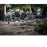 Landwirtschaft, Bauernhof, Hühner