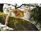 Cat, Free range