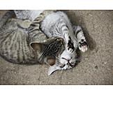 Playful, Kittens, Cuddle