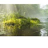 Natur, Moos, Umwelt
