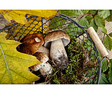 Cepe, Mushroom season, Wire basket