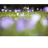 Frühjahr, Wiese, Jahreszeit
