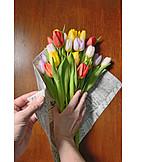 Tulip, Tulips bouquet, Floristry
