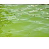 Wasser, Grünalgen