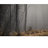 Forest, Mist