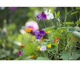 Flower garden, Wildflower