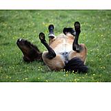 Enjoyment & Relaxation, Horse