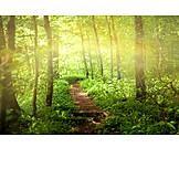 Natur, Wald, Pfad, Waldweg