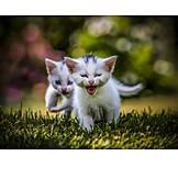Humor & Bizarre, Young Animal, Cat