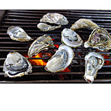 Grill, Oysters, Clam