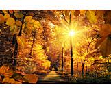 Herbst, Herbstwald, Laubwald
