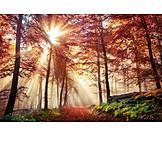 Forest, Autumn, Light beam