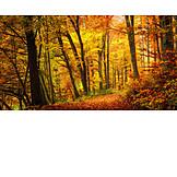 Herbst, Laubwald, Goldener Herbst