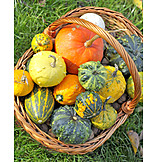 Ornamental Gourd, Thanksgiving, Autumn Decoration