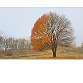 Baum, Blätter, Herbst