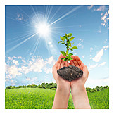 Security & Protection, Growth, Seedling
