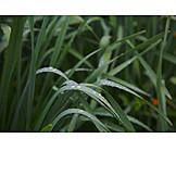 Grasses, Waterdrop
