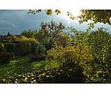 Natur, Garten, Schrebergarten, Kleingarten