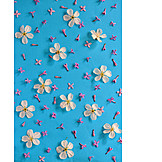 Backgrounds, Blossom, Spring