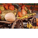 Squash, Thanksgiving, Vegetables