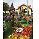 Squash, Thanksgiving, Harvest