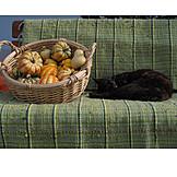 Cat, Squash, Pumpkin Carnival