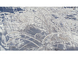 Grasses, Frost