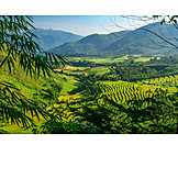 Landscape, Indonesia, Terraced Field