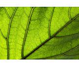 Backgrounds, Leaf, Vein