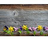 Textfreiraum, Hintergrund, Holz, Frühling