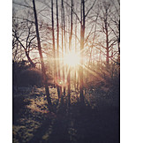 Backlighting, Twilight, Forest