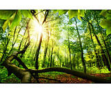 Forest, Spring, Deciduous Forest